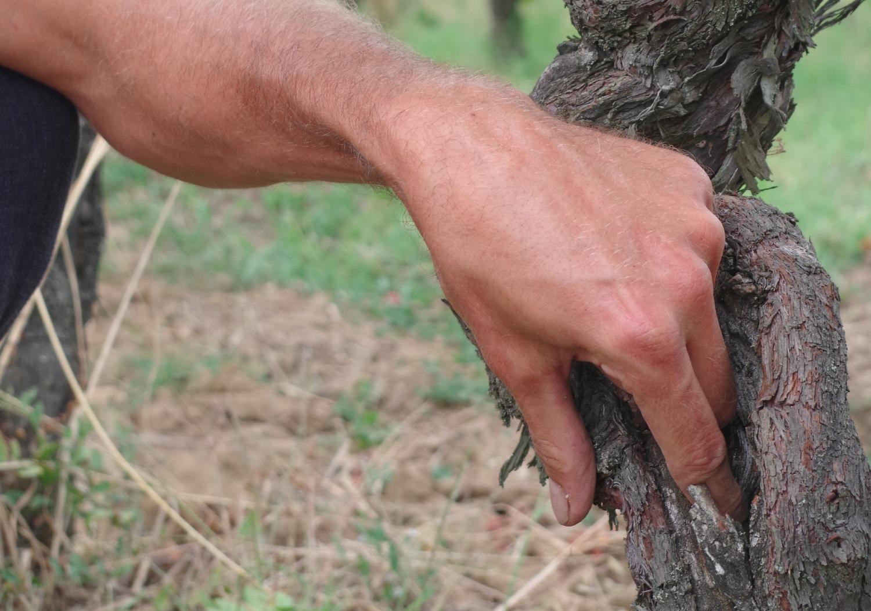 cep de vigne pratiques respectueuse Domaine Ambre tarn 81