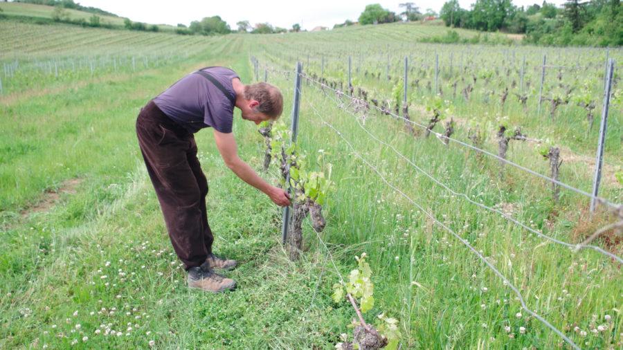 olivier Lignon dans ses vignes en biodyamie à lisle du tarn près de Gaillac