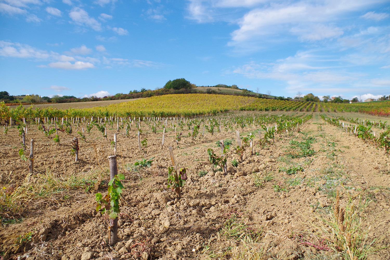 plantier et vignes domaine Ambre à Lisle sur Tarn